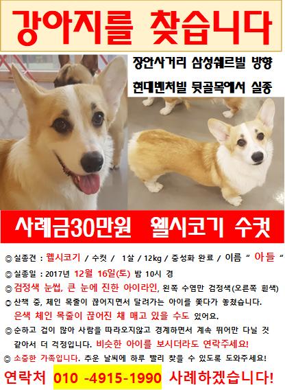 IMG_1438.PNG : [동대문구/장안동] 웰시코기 찾아요!